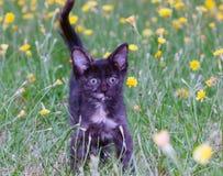 Klumpig liten kattunge på arkivfoto