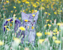 Klumpig liten kattunge på arkivbilder