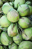 Klunga av gröna kokosnötter Arkivfoton