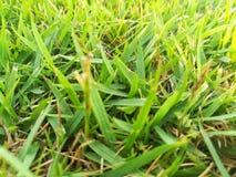 Klunga av grönt gräs på jordningen arkivbild