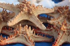 Klunga av startfisken som är ordnad i beställning Arkivbild