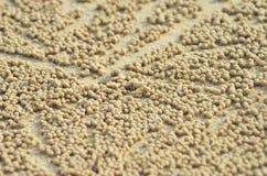 Klungor av guld- bollar av sand runt om ett krabbahål arkivbild