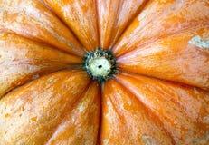 kluseczko orange Zdjęcia Royalty Free