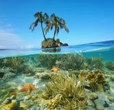 Kluven undervattens- kokospalmholme och koraller Royaltyfri Bild