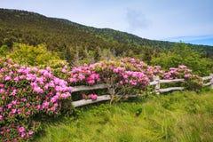 Kluvet stångstaket med rhododendroner Arkivbilder