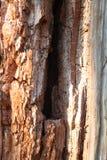 Kluvet träd Royaltyfri Bild
