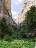 Klyfta av de Rhodope bergen som i överflöd är bevuxen med den lövfällande och vintergröna skogen Arkivfoton
