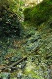Klyfta av det slovakiska paradiset Royaltyfria Foton