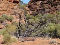 Klyftan av australiern gör till kung kanjonen Royaltyfri Fotografi