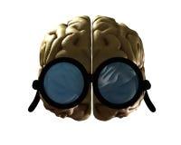 Klyftig hjärna Arkivbild