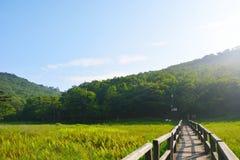 1000km的沼泽作为自然 免版税库存照片