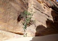 1 2km lange weg (zoals-Siq) aan de stad van Petra, Jordanië Royalty-vrije Stock Foto's