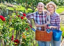 Kümmernde Blumen der älteren Paare im Garten Lizenzfreies Stockbild
