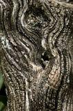 knäcka död extrem treestam Royaltyfri Foto