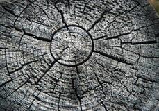Knäcka en gammal stubbe i formen av solen Royaltyfria Foton