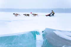 Knäcka i isen på en ren sledding för bakgrundshund Grund dep Royaltyfria Bilder