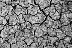 knäckt textur för torr jord Arkivfoto