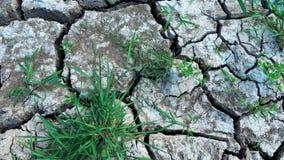 Knäckt torkad yttersida av jorden lager videofilmer