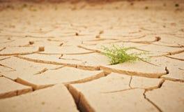Knäckt torr jordning för bästa sikt med abstrakt begreppbakgrund för grön växt Royaltyfria Bilder