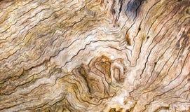 Knäckt trä texturerar Royaltyfri Bild
