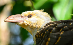 Knäpp fågel Arkivbild