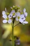 knäpp skyddsrock för blommalady s arkivfoto
