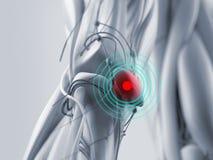 Knäskada för anatomimodellvisning Fotografering för Bildbyråer