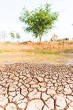 Kn?ckt jord i dammet, torka i Thailand royaltyfria foton