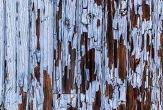 Knackende blaue Farbe masern der Oberfläche der hölzernen Wand weg abziehen Stockbilder