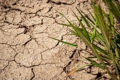 Knackt die Dürre auf Spanien-` s trockenen Gebieten Schlamm unfruchtbar stockfoto