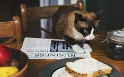 Knajpa ranku posiłku Śniadaniowy kot obrazy stock