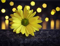 Knal van geel met bokeh royalty-vrije stock foto