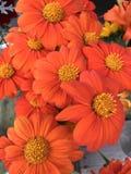 Knal van oranje bloemen stock foto's