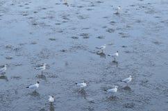 Seemöwe und Küste Stockfoto