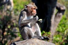 Knall Saen, Thailand:  Affe, der auf Wand sitzt Lizenzfreie Stockbilder