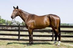 Knap paard Royalty-vrije Stock Fotografie