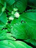 knappar av jordgubbar Arkivfoton