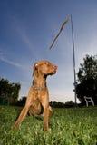 Knappe hond. stock foto's