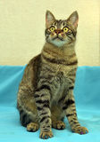 Knappe jonge gestreepte katkat stock fotografie