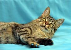 Knappe jonge gestreepte katkat stock afbeelding