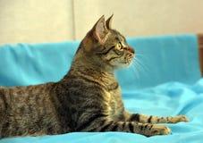 Knappe jonge gestreepte katkat stock afbeeldingen