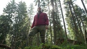 Knappe jonge mens die alleen het genieten van de van mooie mening in een bos wandelen - stock videobeelden