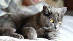 Knappe Jonge Mens die zijn Gray Cat Pet knuffelen stock videobeelden