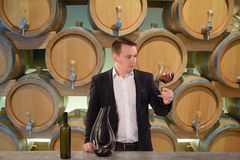 Knappe meer sommelier of winemaker het bekijken wijnglas in de kelder royalty-vrije stock afbeelding