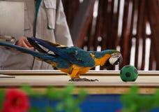 Knappe papegaai Stock Afbeeldingen