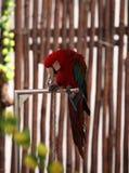 Knappe papegaai Royalty-vrije Stock Fotografie