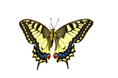 Knappes Swallowtail stockfotografie