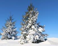 Knaprig klar vinterdag med ny ren snö på prydliga träd royaltyfri fotografi