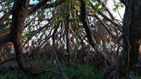 Knaprigt stupat träd arkivbild