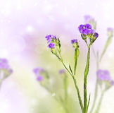 Knapweed on a blurred background Royalty Free Stock Photography